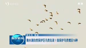 衡水湖自然保护区鸟类名录 I 级保护鸟类增至16种
